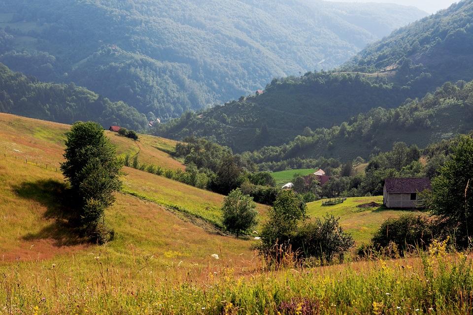 Złote łąki, gęste lasy, wcięte w płaskowyż doliny – typowy pejzaż Zlatiboru
